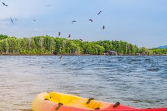 Beautiful scenery of the red hawks while flying to find food with kayaks floating in the sea at Bang Chan village The No-Land. Village in Chanthaburi, Thailand royalty free stock photos