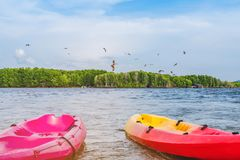 Beautiful scenery of the red hawks while flying to find food with kayaks floating in the sea at Bang Chan village The No-Land. Village in Chanthaburi, Thailand royalty free stock images