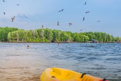 Beautiful scenery of the red hawks while flying to find food with kayaks floating in the sea at Bang Chan village The No-Land. Village in Chanthaburi, Thailand royalty free stock image