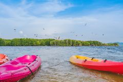 Beautiful scenery of the red hawks while flying to find food with kayaks floating in the sea at Bang Chan village The No-Land. Village in Chanthaburi, Thailand stock photos