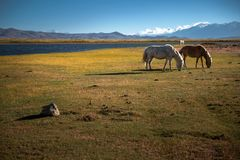 The Beautiful Scenery: Travelling in Tibet Royalty Free Stock Photo
