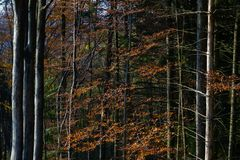 Beautiful scenery of the trees in autumn on mountain Medvednica in Zagreb, Croatia
