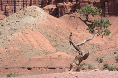 Beautiful scenery of Utah. Scenery of Utah's Capitol Reef National Park Royalty Free Stock Photos