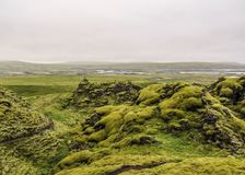 Beautiful scenery with volcanic lava field covered under sort carpet of green Icelandic moss in cloudy summer day royalty free stock images