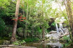 Beautiful scenery waterfall green forest and blossom maple trees at Phu Kra Dueng National Park, Loei Thailand. Beautiful scenery waterfall green forest and stock images