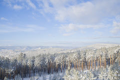 Beautiful scenery of a winter forest. Stock Photos