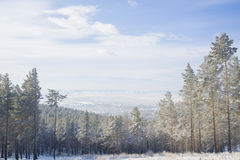 Beautiful scenery of a winter forest. Royalty Free Stock Photos