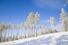 Beautiful scenery of a winter forest. Stock Photo