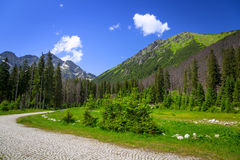 Beautiful scenery of Wlosienica meadow in Tatra mountain Royalty Free Stock Photo