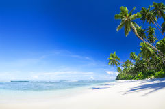 Beautiful scenic beach with Palm Tree Stock Images