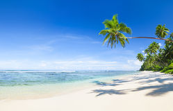 Beautiful Scenic Beach with Palm Tree Royalty Free Stock Photo