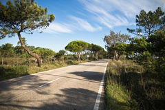 Beautiful scenic empty road on atlantic coast with trees in blue sky Stock Photos