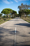 Beautiful scenic empty road on atlantic coast with trees in blue sky Stock Images