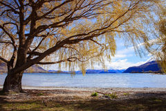 Beautiful scenic of lake wanaka in south island new zealand   im Stock Photos