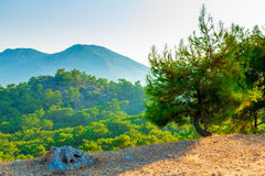 Beautiful scenic mountains covered  pine forest Royalty Free Stock Photography