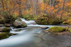 Beautiful scenic at Oirase stream Stock Images