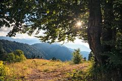 Beautiful scenic summer autumn forest landscape in Caucasus Mountains in Sochi at sunset. Sun shining through tree leaves. Beautiful scenic dramatic summer royalty free stock images