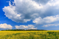 Beautiful scenic summer landscape of wild forest meadow with yellow blooming weed, blue sky and white cumulus clouds. A sunny day Stock Photography