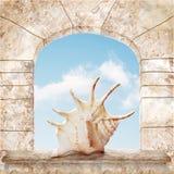 Beautiful schell Stock Image