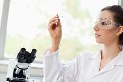 Beautiful science student. Looking at a microscope slide in a laboratory Royalty Free Stock Image