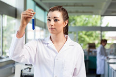 Beautiful scientist looking at a test tube Royalty Free Stock Photography