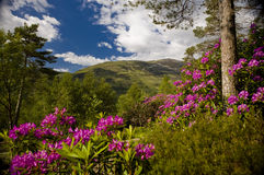 Beautiful Scotland in Summer Royalty Free Stock Image