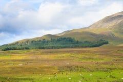 Beautiful scottish panorama Royalty Free Stock Photo
