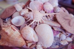 Beautiful sea background with different shells. stock photography