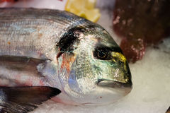 Beautiful sea bream fish with colorful scales and fresh eye Stock Photos