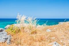 Beautiful sea coast with wild grasses Royalty Free Stock Photo