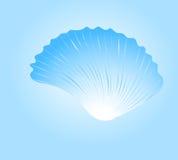 Beautiful sea cockleshell. Vector. eps 8 Stock Photography