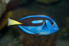 Beautiful sea fish Royalty Free Stock Images