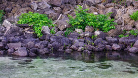Beautiful sea in Grand Baie, Mauritius. Beautiful sea with black rocks in Grand Baie, Mauritius Stock Photography