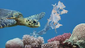 Beautiful sea hawksbill turtle swiming above colorful tropical coral reef polluted with plastic bag stock image