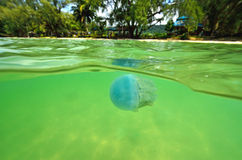 Beautiful sea jellyfish floating in the sea of Thailand, Underwa Stock Photos