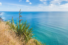 Beautiful sea landscape with a blossoming grass Royalty Free Stock Photography