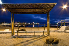 Beautiful sea lions relaxing along the port in San Stock Photography