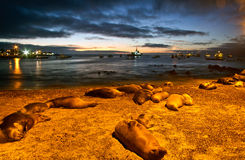 Beautiful sea lions sleeping along the port in San Stock Image