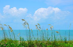 Beautiful sea oats along ocean shoreline Stock Photos