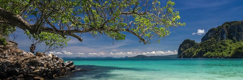 Beautiful sea scene. Tree branch, beautiful sea and mountain at Thailand Royalty Free Stock Photos