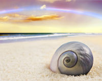 Beautiful  sea shell on the beach Royalty Free Stock Photos