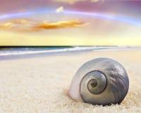 Beautiful  sea shell on the beach Royalty Free Stock Photos