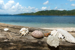 Beautiful sea shell, coral with blue ocean and white sand beach. Stock Images