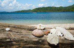 Beautiful sea shell, coral with blue ocean and white sand beach. Stock Photos