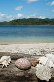 Beautiful sea shell, coral with blue ocean and white sand beach. Stock Photo