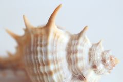 Beautiful sea shell covered with sea salt. Structure. Macro. White background stock photos