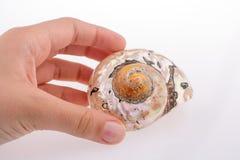Beautiful sea shell Royalty Free Stock Photos