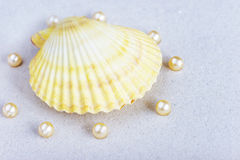 Beautiful sea shell and pearls Stock Photo