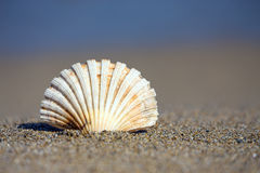 Beautiful sea shell on sandy beach Royalty Free Stock Photo