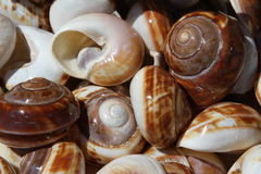 Beautiful sea shells collected in the sea Stock Photos